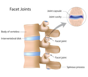 Facet Joints